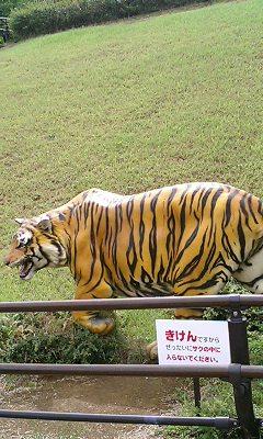 今日は虎を見に来ました。